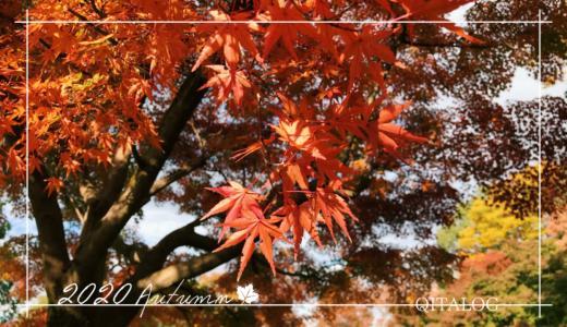 【2020-紅葉-】昭和記念公園で紅葉狩り。